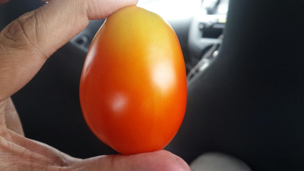 shyam tomato